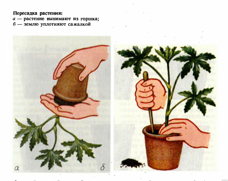 Как сажать комнатные растения 11