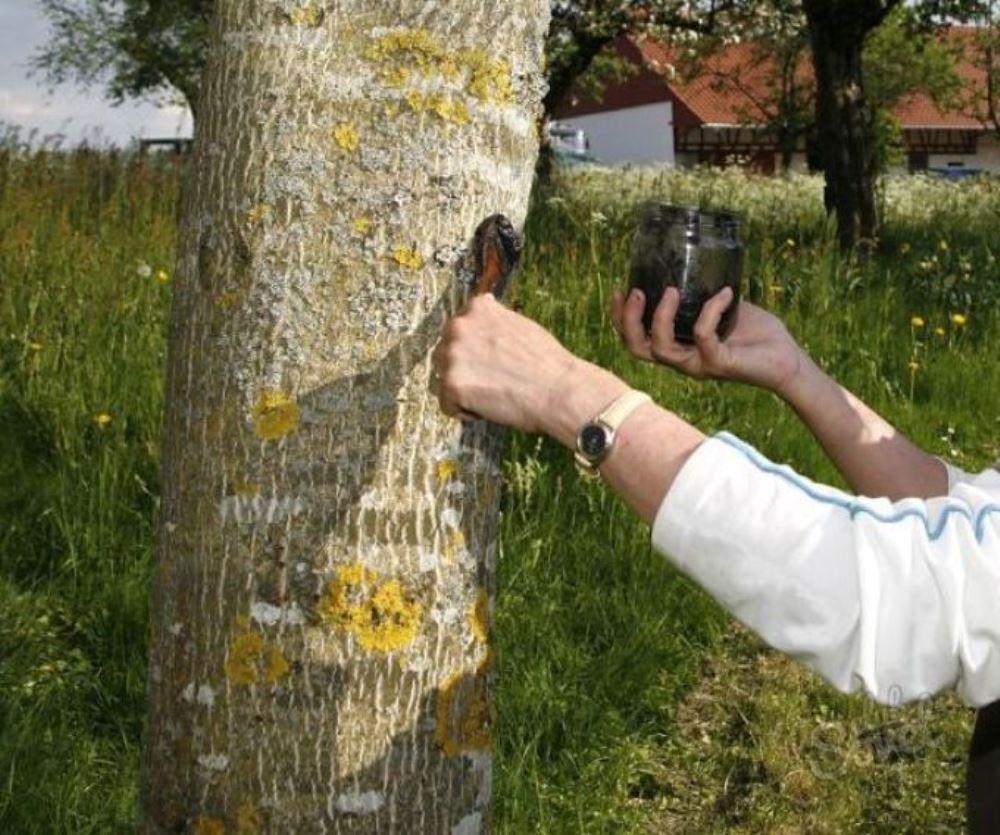 Чем замазать дерево в домашних условиях