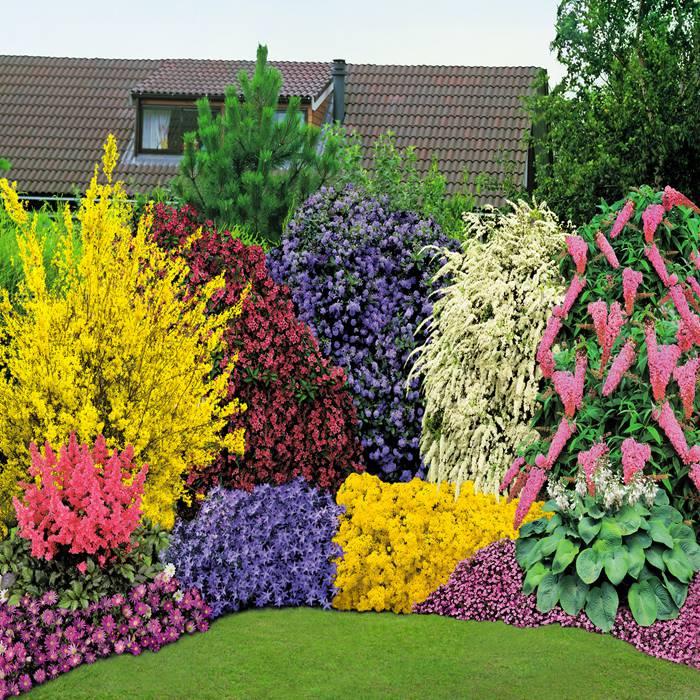 Многолетние цветы в саду и огороде