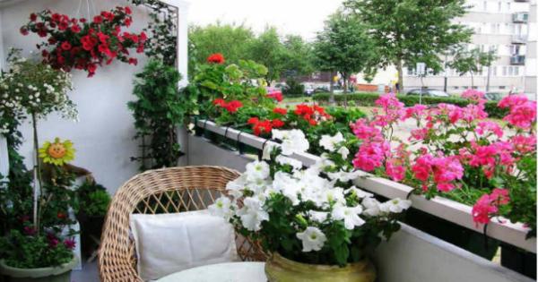 Картинки по запросу Хотите роскошный цветник в квартире? Тогда запоминайте секретики Поделиться на Facebook